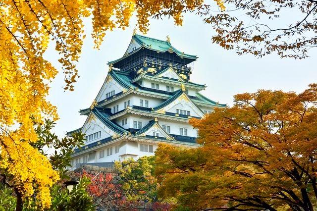 大阪城 いちょう.jpg